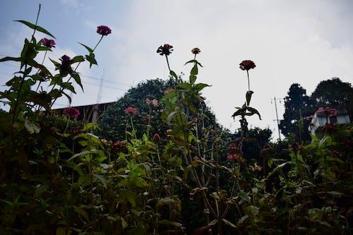 Základová fotografie zdarma na téma fotografie znízkého úhlu, květinová zahrada, nízký úhel, perspektiva