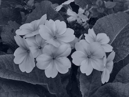 Gratis arkivbilde med épanouies, fleurs, floraison, flore