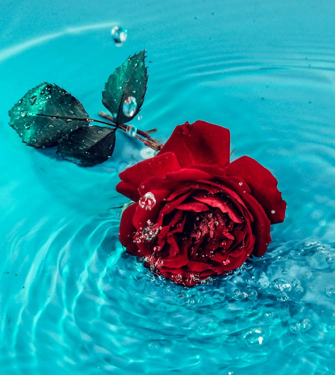 agua, bonito, brillante