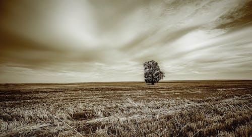 Бесплатное стоковое фото с дерево, минимальный, облака