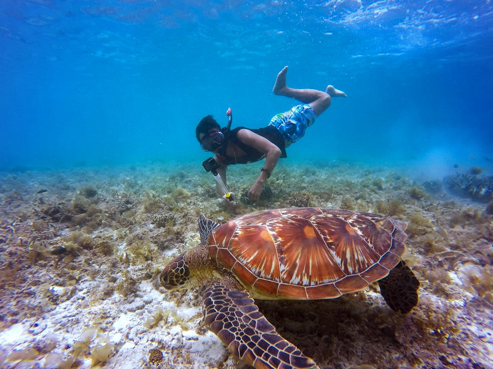 Brown Tortoise in Body of Water Beside Man