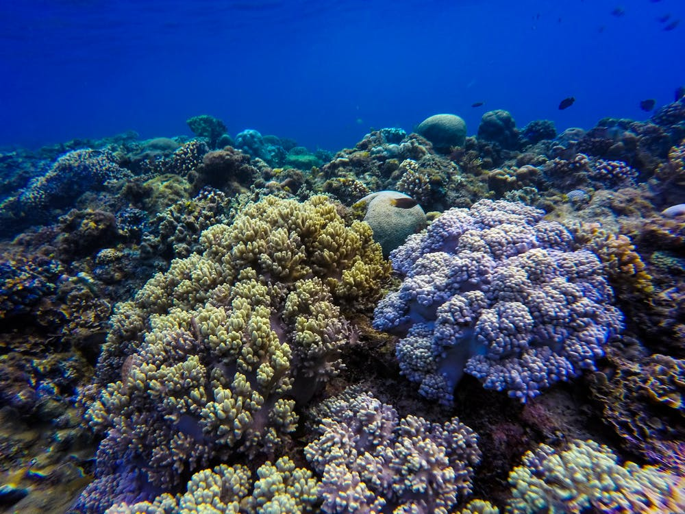 サンゴ, シースケープ, リーフ