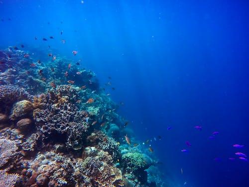 mavi deniz, mavi okyanus, mercanlar, sualtı içeren Ücretsiz stok fotoğraf