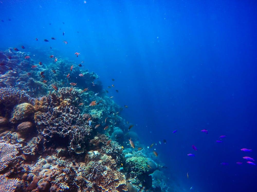 산호, 수중, 푸른 바다