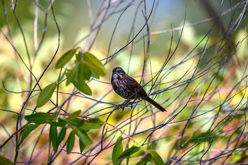Бесплатное стоковое фото с осень, природа, птица