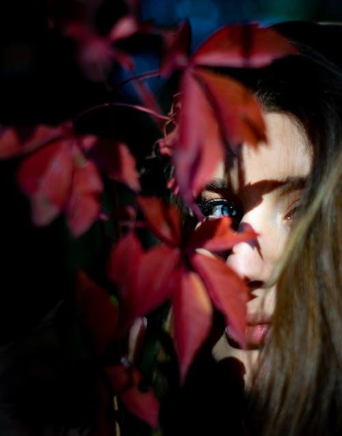 Free stock photo of blue eyes, eye, fall, fall colors
