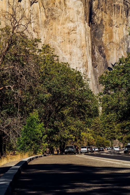 Darmowe zdjęcie z galerii z drewno, droga, drzewa, drzewo