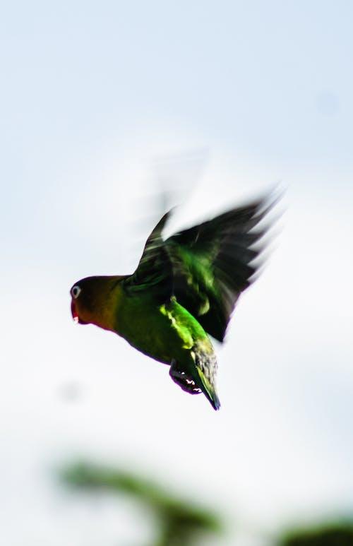 Δωρεάν στοκ φωτογραφιών με πέταγμα, πουλί, πουλιά αγάπης