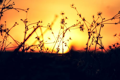 Gratis lagerfoto af smuk solnedgang, solnedgang