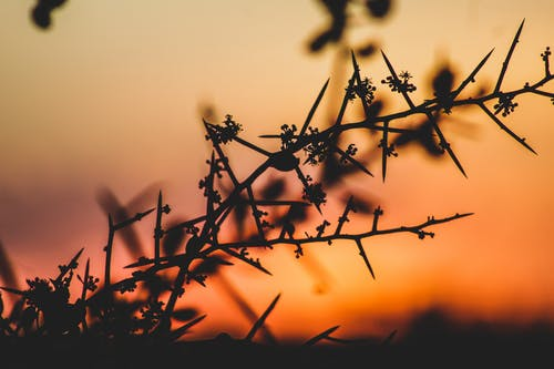 日落, 美丽的夕阳 的 免费素材照片