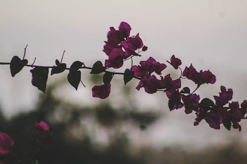 紫色小花, 美丽的花 的 免费素材照片