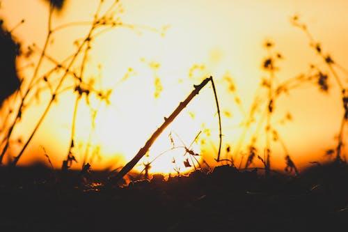 Gratis lagerfoto af smuk solnedgang
