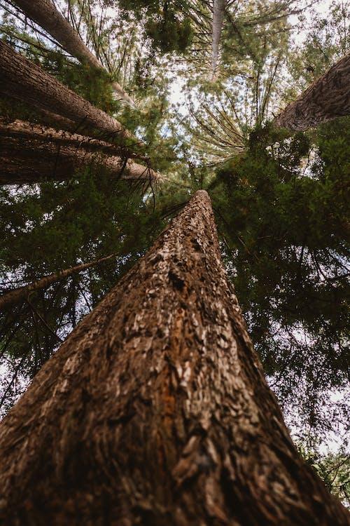 cây, cây lá kim, công viên