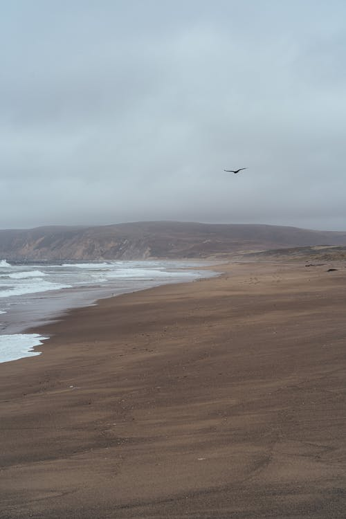 A Bird Flying Over The Seashore Under White Clouds