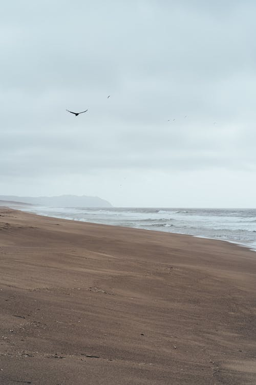 Vogel, Der über Sandstrand Des Blauen Meeres Unter Grauem Himmel Fliegt