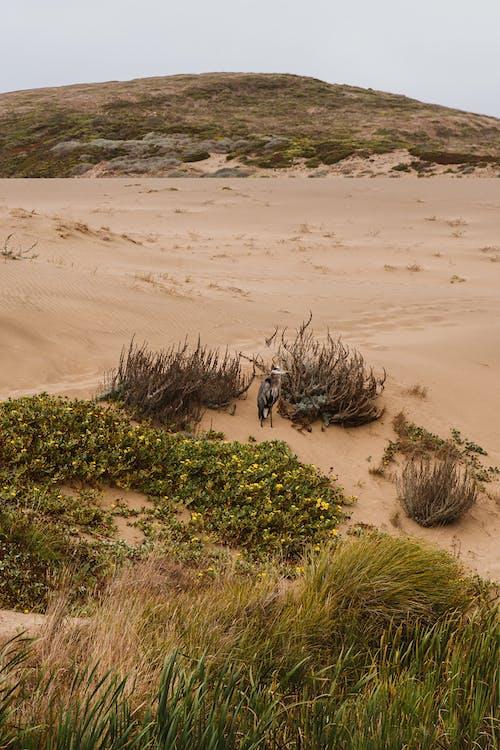 вода, дерево, дюна