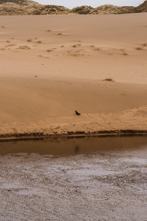 Lone Bird On Brown Sandy Banks Close To The River