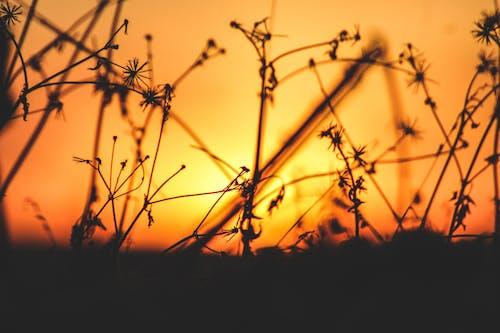 橘色天空, 美丽的夕阳 的 免费素材照片
