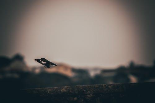 Immagine gratuita di bellezza, birdwatching, canon, fauna selvatica