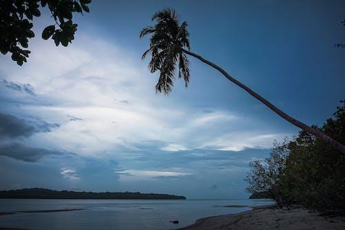 Fotobanka sbezplatnými fotkami na tému dobrodružstvo, kokosová palma, more, oblačný