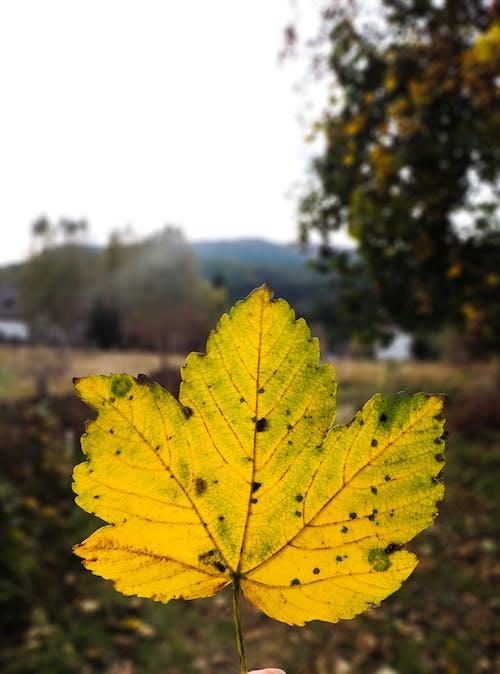 Gratis arkivbilde med foto, fotografi, gul, gyllengul