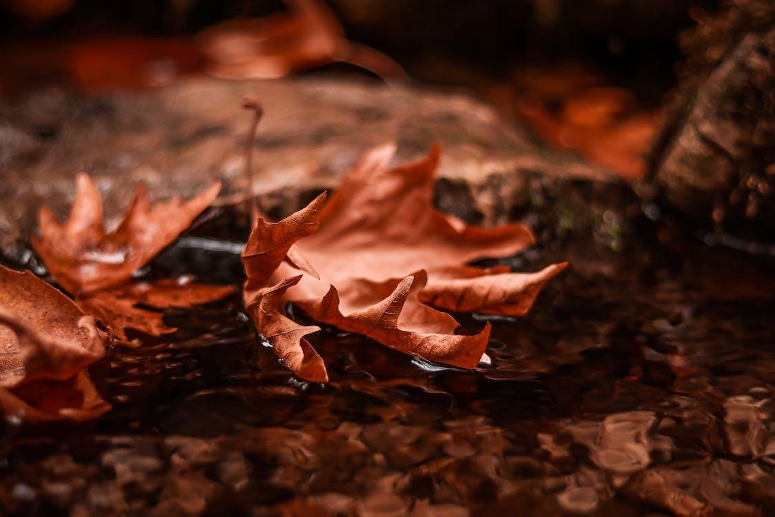 focus selettivo, foglie autunnali, foglie secche