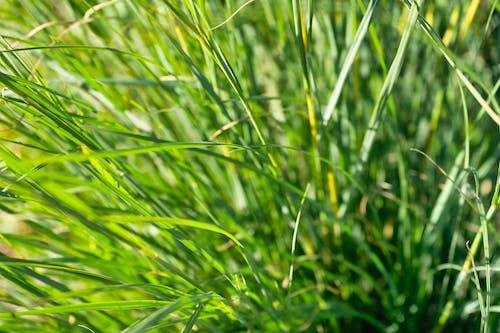 Kostnadsfri bild av blad av gräs, gräs, grön, konstnärlig bakgrund