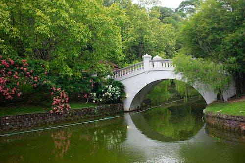 Ilmainen kuvapankkikuva tunnisteilla joki, kukat, silta, vesi