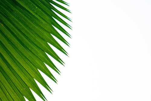 Ilmainen kuvapankkikuva tunnisteilla kukka, lehti, lopuille, vihreä