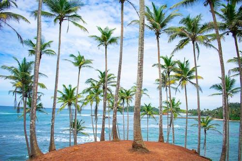 Ilmainen kuvapankkikuva tunnisteilla hiekkaranta, kesä, kookospalmu, paratiisi