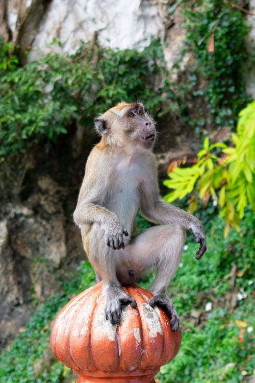 Ilmainen kuvapankkikuva tunnisteilla apina, eläin, lopuille, vihreä