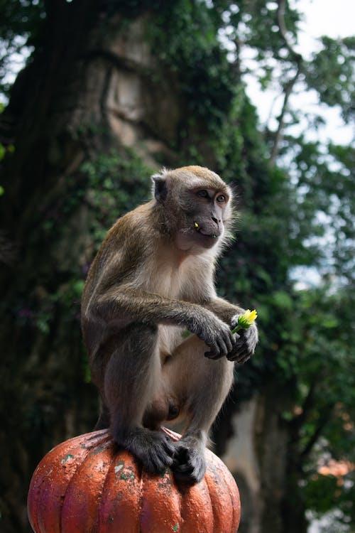 Ilmainen kuvapankkikuva tunnisteilla apina, eläin, kukka, lopuille