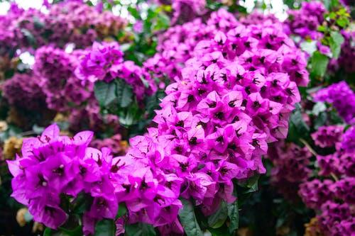 Ilmainen kuvapankkikuva tunnisteilla kukka, lopuille, vihreä