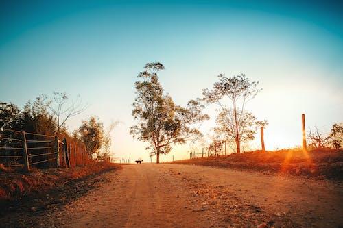 Foto d'estoc gratuïta de a l'aire lliure, alba, arbres, autopista