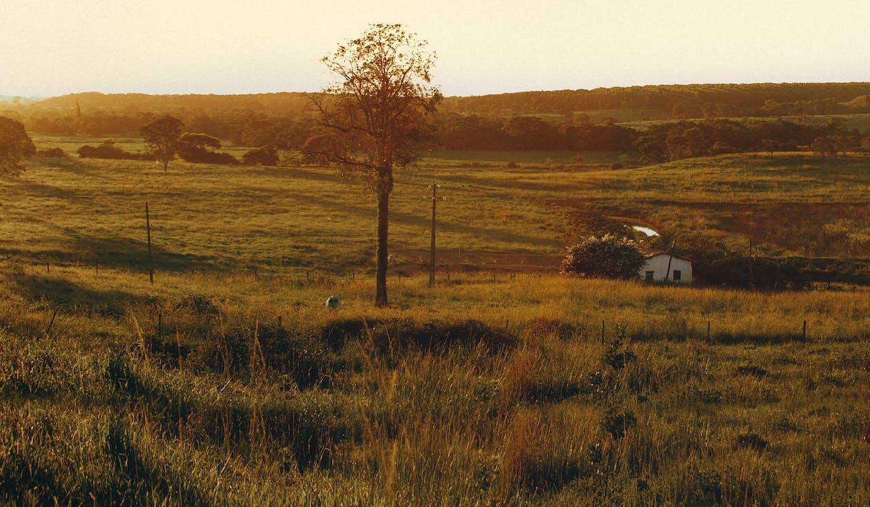 čerstvý vzduch, denní světlo, farma