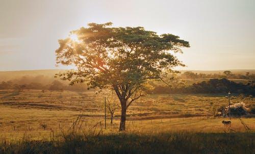 Бесплатное стоковое фото с восход, дерево, дневной свет, за городом