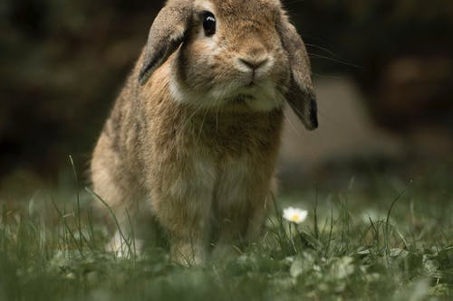 Free stock photo of bunny, cute, cute animals, ear