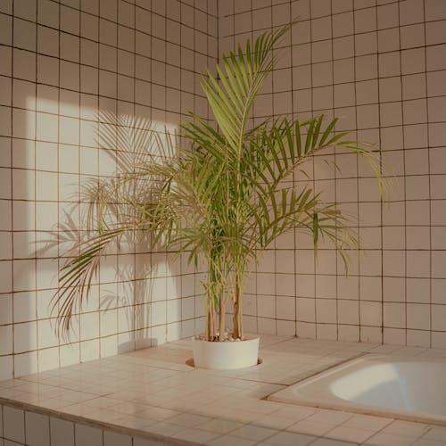 Fotobanka sbezplatnými fotkami na tému kúpeľňa, listy, rastlina, rastlina vkvetináči