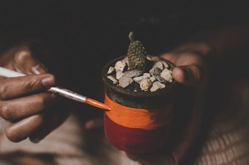 Ingyenes stockfotó cserép, festés, kaktusz, tüskés témában