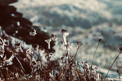 Foto profissional grátis de atmosfera, com frio, congelado, congelar