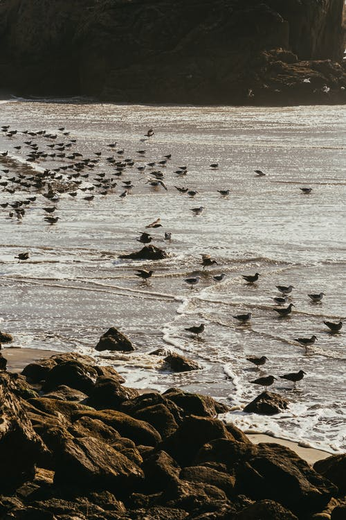 Flock of Birds By The Seashore