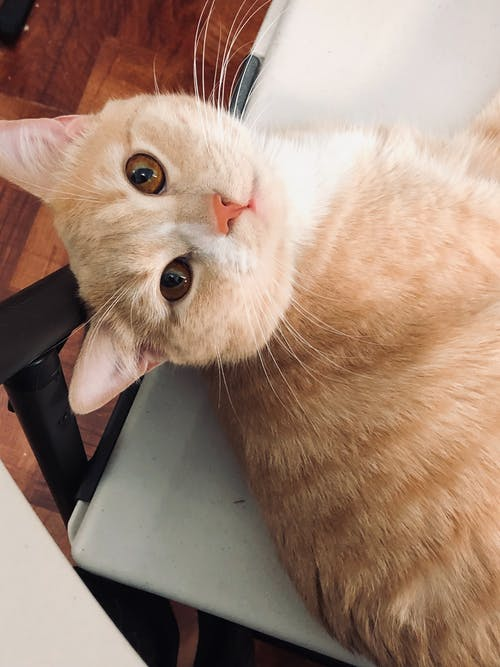Бесплатное стоковое фото с кошки, красивая кошка, красивые животные, милый кот
