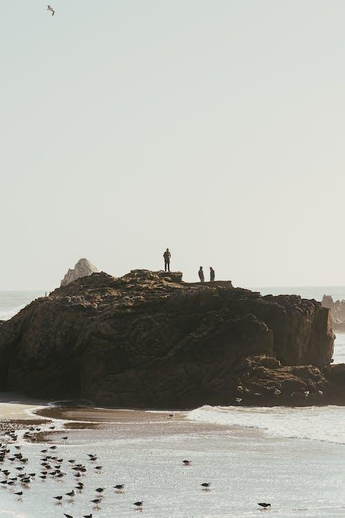 bølger, daggry, dagslys