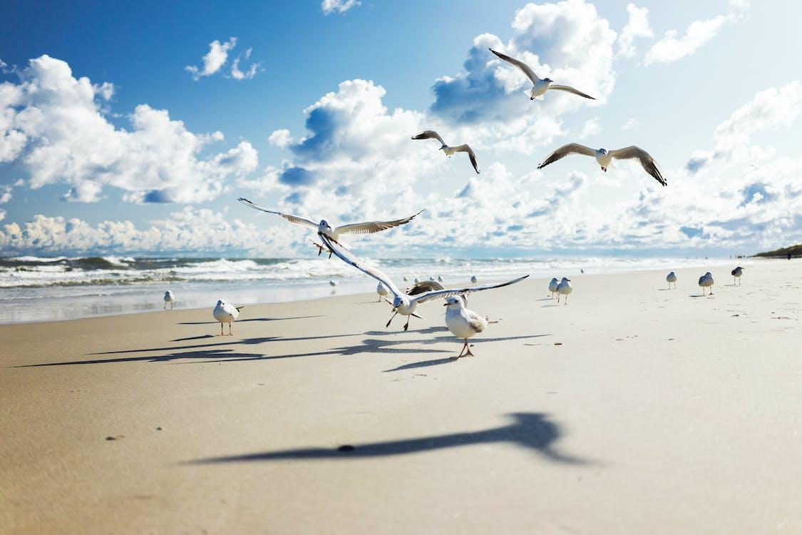 djur, fågel, fåglar