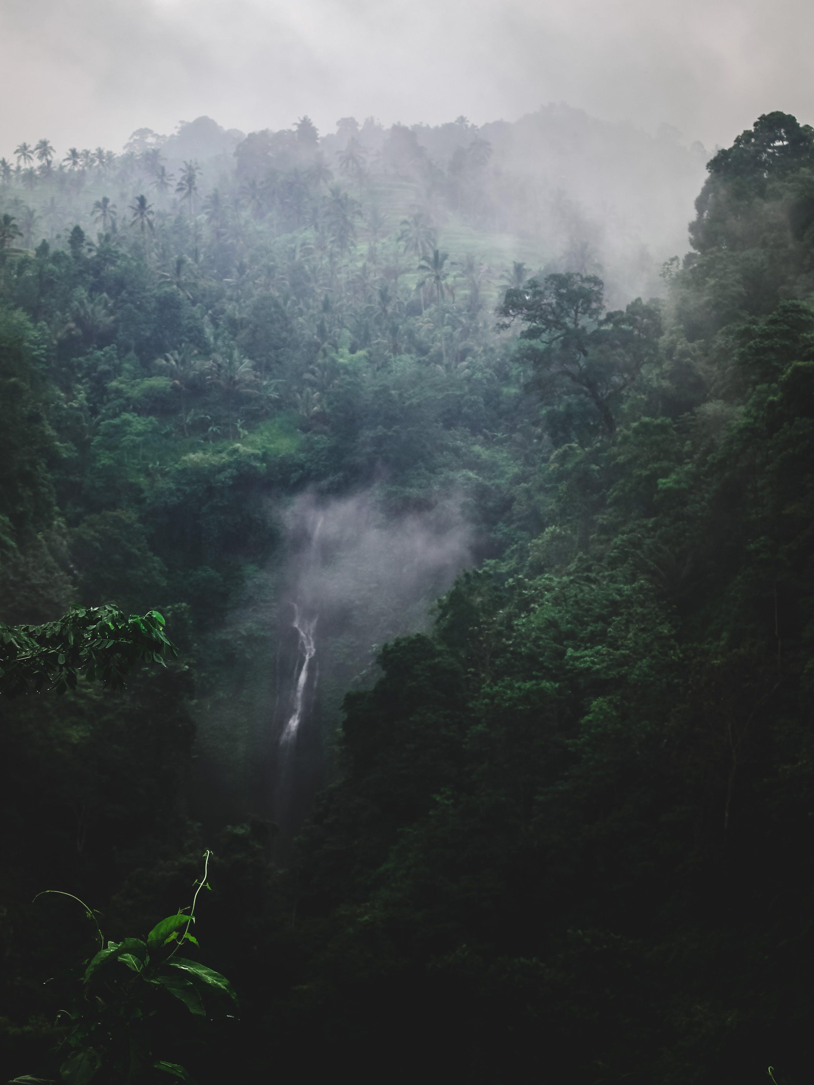 of fog, foggy, forest, green