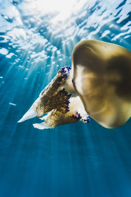 Darmowe zdjęcie z galerii z eksploracja, fotografia zwierzęcia, lato, meduza