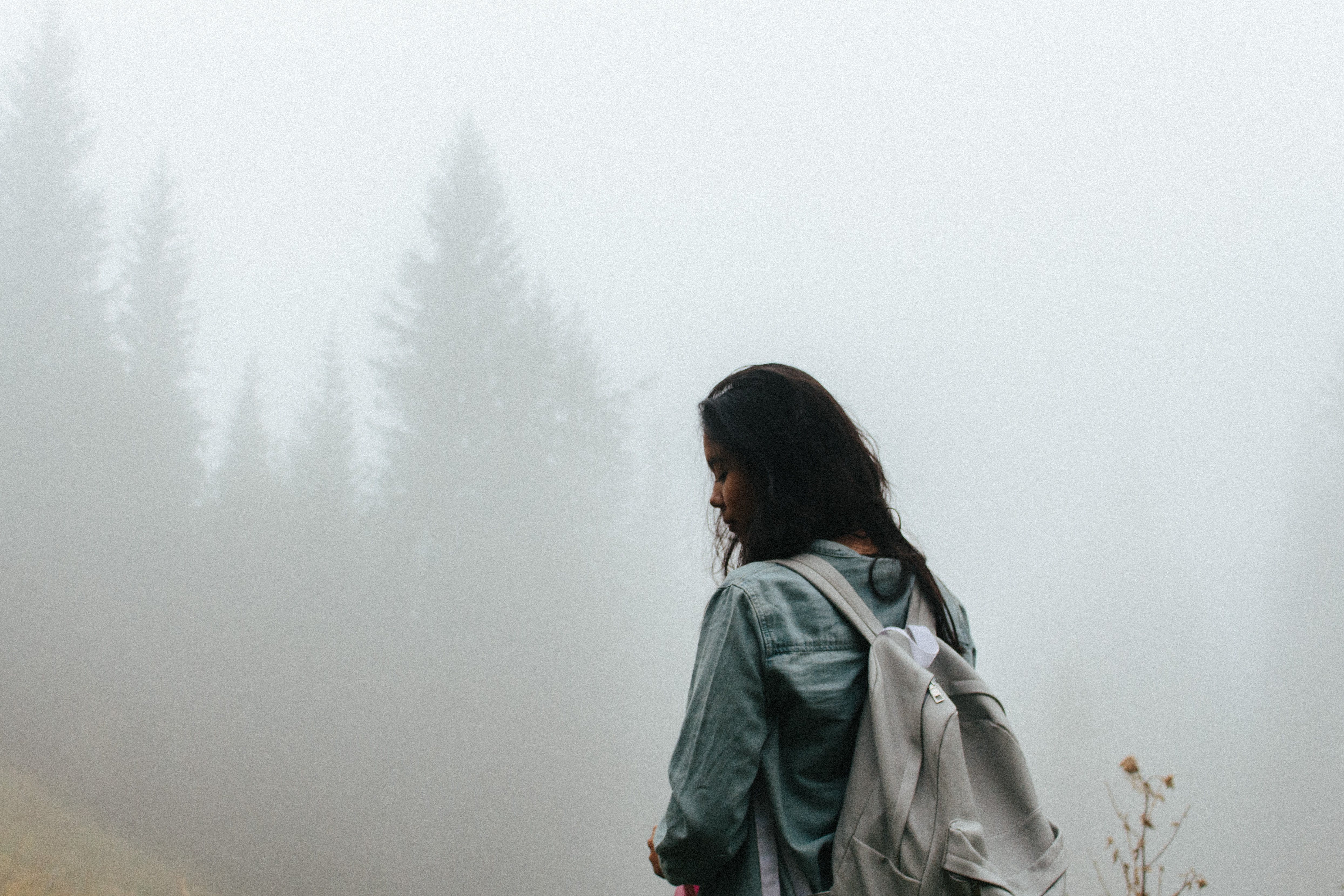Free stock photo of adventure, fog, foggy, forest