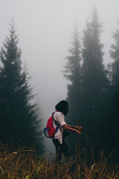 คลังภาพถ่ายฟรี ของ ธรรมชาติ, ภูเขา, มัว, หมอก
