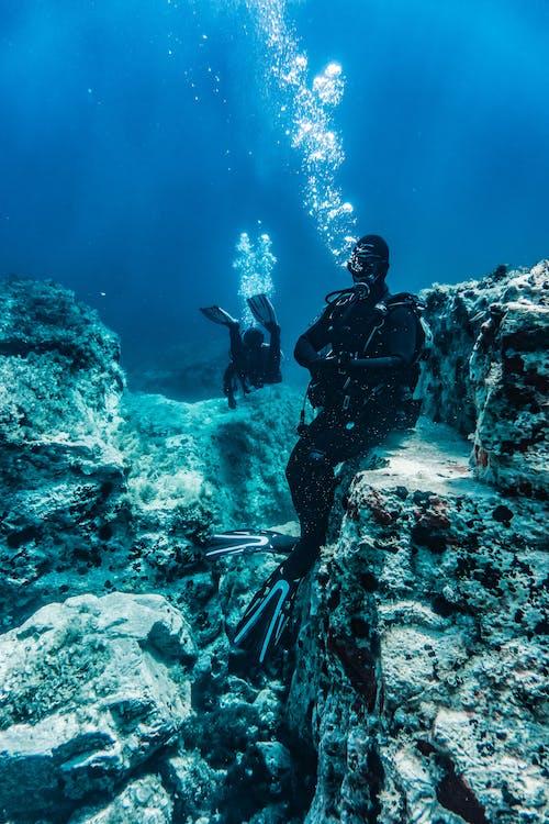 dalam, di bawah air, karang