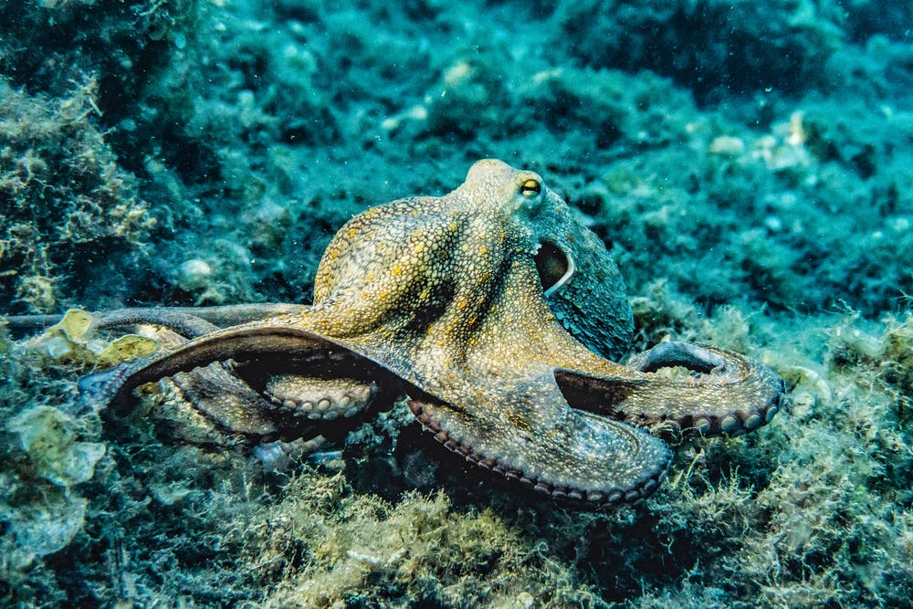 An octopus. | Photo: Pexels